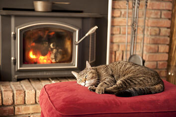 Creating a Pet Friendly Home