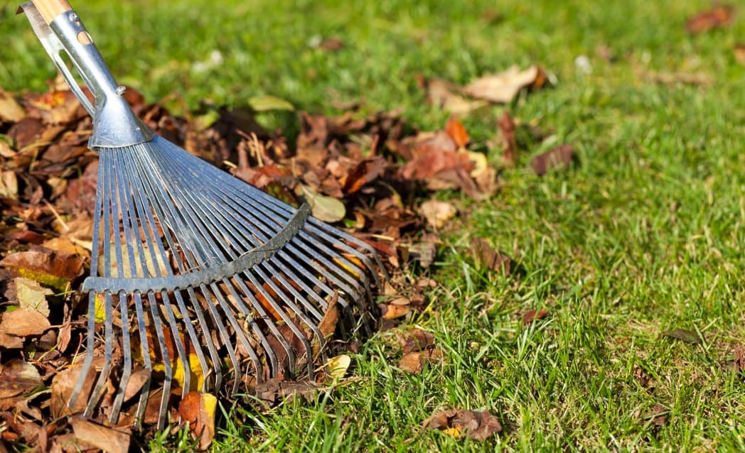 Close-up of a rake gathering colorful autumn leaves on a green lawn